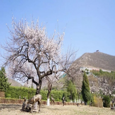桃峰园第四届生态节地骨灰撒散集体安葬仪式